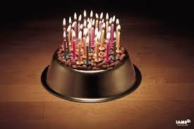 dog birthday cake birthday cake iams dog food print ad