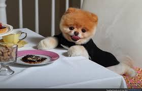 dog meme funny boo dog breakfest funny dog in zebra clothe funny
