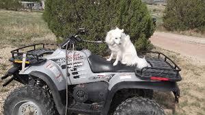 american eskimo dog rescue colorado meet max in co a petfinder adoptable american eskimo dog dog in
