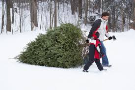christmas tree lots farms and permits family nrtoday com