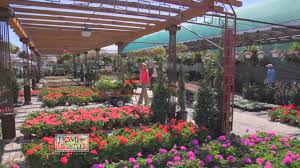 texas native plants landscaping ruibal u0027s plants of texas on home and lifestyle tv youtube