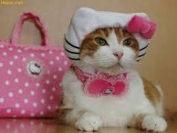Kitten Halloween Costumes Pet 106 Pet Style Images Animals Costumes