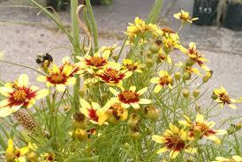 oklahoma native plants oklahoma native plants plant wisdom a horticulture salon