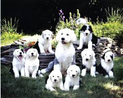 Are All Dogs Colour Blind See The World Differently Filters For Color Blindness Dog Vision