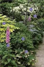 Zone Gardening - breaking the rules plant identification fine gardening