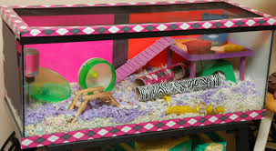 halloween cage decorations hamster diy youtube hammy happenings page 25