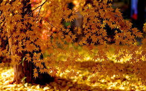 fall leaves live wallpaper 4k android apps google play
