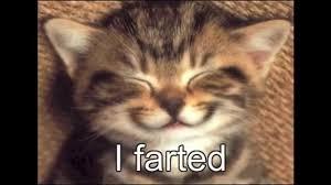 Cat Pictures Meme - best cat memes ever youtube