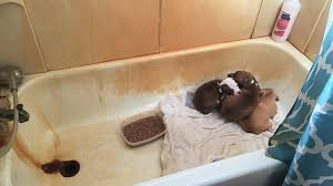 Dogs In The Bathtub Skowhegan Woman Arrested For Animal Cruelty Illegal Pet Shop And