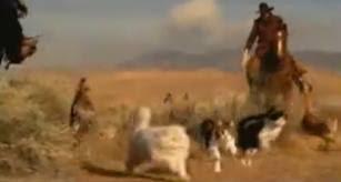 Herding Cats Meme - friday films cowboys herding cats adopt a lapcat