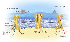 significado de imagenes sensoriales wikipedia neurotransmisores y receptores artículo khan academy