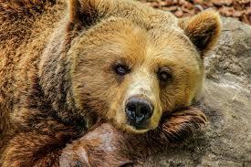 don u0027t fear bears learn