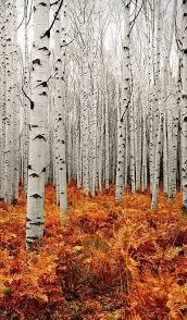 photography inspiration photoshop aspen and autumn