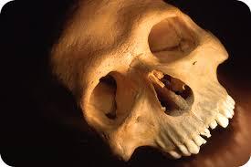 skull ideas