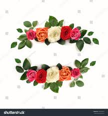 beautiful ornamental flower roses isolated on stock photo