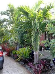 gardening in south florida bromeliads in the garden florida gardening south florida style bromeliads in the garden