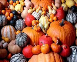 cute pumpkin backgrounds 44 pumpkin hd wallpapers backgrounds wallpaper abyss