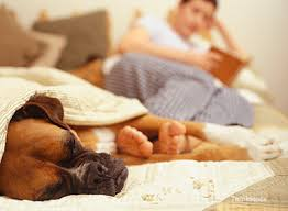 boxer dog feet kidney disease in dogs what dog owners should know