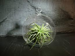 tear drop air plant terrarium container your choice of air
