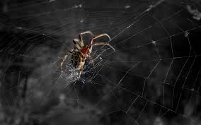 halloween spider background spider full hd wallpaper and background 2560x1600 id 118596