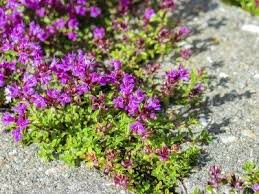 heat loving plants heat tolerant ground cover plants drought tolerant ground covers