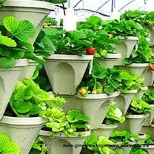 Urban Garden Supply - vertical gardening systems hydroponic strawberry vertical