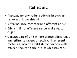 How Does A Reflex Arc Work In A Nervous System Spinal Cord Reflexes