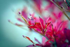 okutama autumn colors 2010 gaijinpot injapan