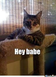 Hey Babe Meme - hey babe by goldenowlbird meme center