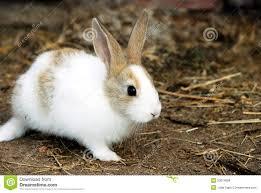 rabbit bunny bunny rabbit stock photo image of farmland nature 20814898