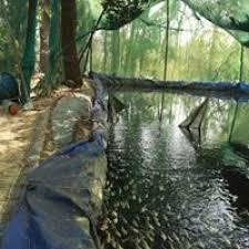 4 ornamental fish farm karad animal agriculture kerala