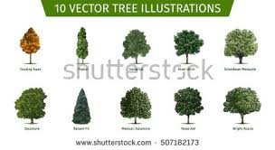 different tree sorts names illustrations tree stock vector hd