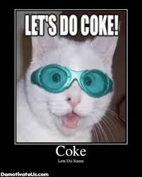 Cat Cocaine Meme - what s in a name cocaine and meta data brian mclane