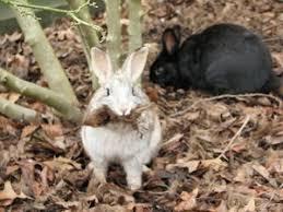 rabbit garden how to prevent rabbits from your garden gardens