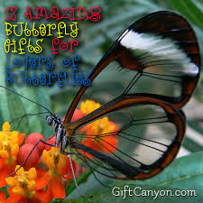 butterfly gifts 12 amazing butterfly gifts for of butterflies gift
