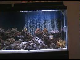 55 gallon aquarium light part 1 my 55 gallon marine salt water aquarium coral reef fish tank