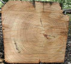 wood tree rings images Mic uk tree rings jpg