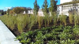 native plants in landscape management sustainable landscaping the field museum
