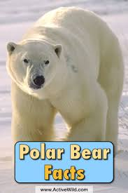 14 best best of active wild images on pinterest wildlife