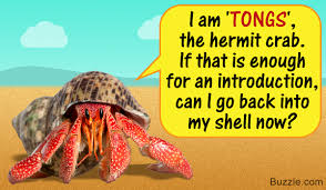 100 super cool names for your pet hermit crab that sound awesome