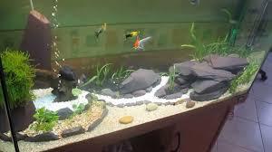 idee deco aquarium paysage aquarium youtube