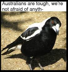Aussie Memes - just 100 really fucking funny memes about australia funny memes