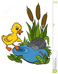 cartoon birds for kids little cute duckling stock vector image