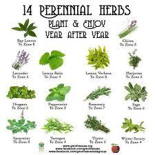 herb chart perennial herbs chart perennials herbs and plants