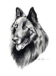 belgian sheepdog tattoo belgian sheepdog dog art portraits photographs information and