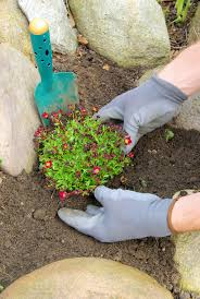 Alpine Rock Garden by Rockery Soil Mixes U2013 Tips On Soil Prepping A Rock Garden Bed