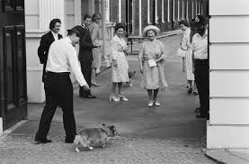The Queen S Corgis by 90 Years Of Queen Elizabeth Looking Lovingly At Corgis Racked
