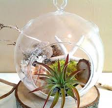 starfish large round glass globe terrarium by jtlcreations on zibbet