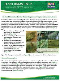 Plant Disease Diagnosis - plant disease facts on line series