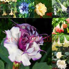 online buy wholesale fragrant flower plants from china fragrant